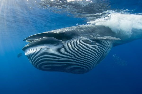Stunning up close and personal images of Bryde's whale