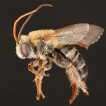 Stunning Photographs Show Bees Close Up